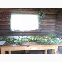 Продам лікарські рослини на замовлення до 50 грн