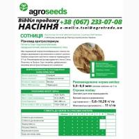 Насіння озимої пшениці Сотниця (2019 року) від виробника
