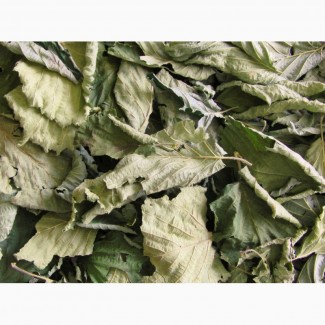 Куплю лист лещины