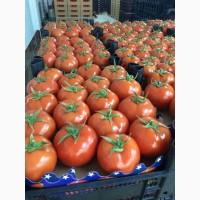 Предлагаем помидоры на постоянной основе