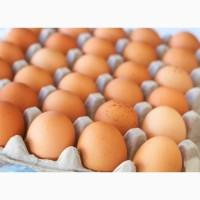 Куплю інкубаційне яйце