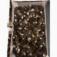 Продам гриби сморчок