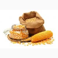Продам кукурузу 160$