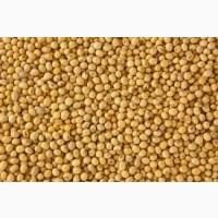 Куплю СОЮ, закупаем с ГМО без ГМО
