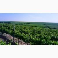 Продам Сухой Красный Вино-Продукт Каберне Мерло