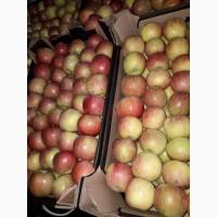 Продам яблоки оптом. 1, 2 сорт