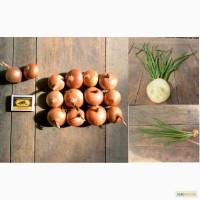 Продам лук штутгарт на перо, фракция 4-6