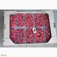 Продам ягоду малины сорт Феникс, Феномен