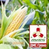 Продам гібрид кукурузи ДМС ГРОНО (2017 року)