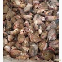 Продаём рыбные отходы