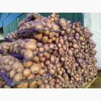 Картофель 2 сорт