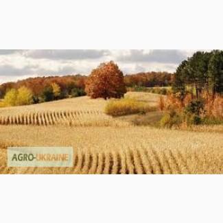 Купим пшеницу.Вся Украина