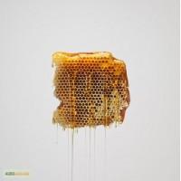 Купуємо по вигідній ціні мед