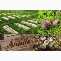 Продам бізнес по розведенню равликів Tante Snails під ключ