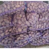 Картофель товарный Тирас
