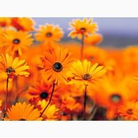 Заготавливаю и продаю качественные лекарственные травы мелким оптом в Украине