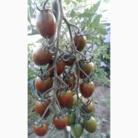 Продам томат черри