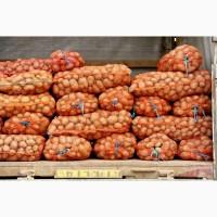 Купим Картофель оптом. Сумская-Черниговская обл