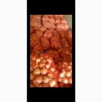 Продам лук оптом от 20 тонн срочно