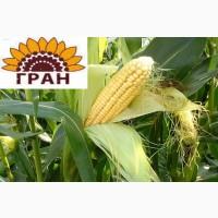Гібрид Кукурузы ВН 6763 ФАО 320 + безкоштовна доставка