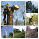 Обрезка веток, кронирование деревьев