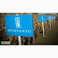 Гибрид кукурузы Монсанто украинской селекции от компании Райз