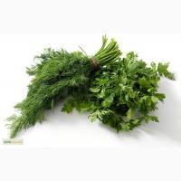 Продам зелень от производителя