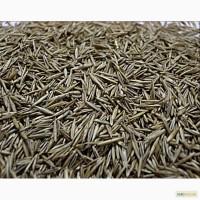 Продаем семена Овсяницы красной (кормовая трава)