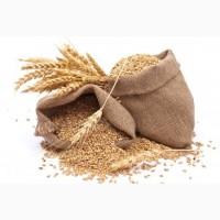 СРОЧНО продам пшеницу 2 класс на экспорт. От производителей и поставщиков
