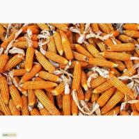 Продам семена кукурузы Монсанто 2200 мешок