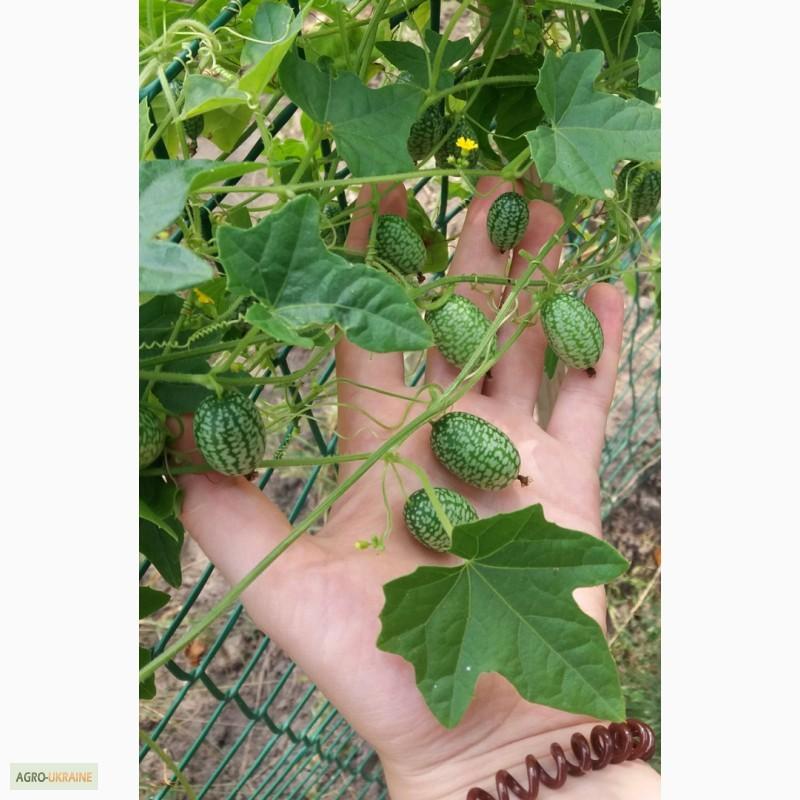 семена для экзотической грядки