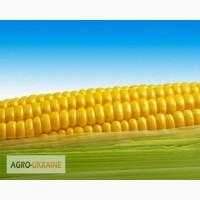 Закупаем кукурузу по хорошей цене