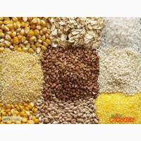 Компания AGROJUST купит пшеницу и другие зерновые