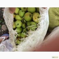 Закупаем яблоки на соки Винницкая, Полтавская и другие области