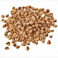 Семена гречихи, продам семена гречки. Посевная гречка. посевмат 1 репродукция / елита