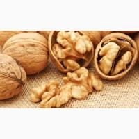 Продам грецкий орех (горіх) отличного качества, бойный 1т, срочно