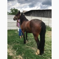 Продаж та обмін робочих коней
