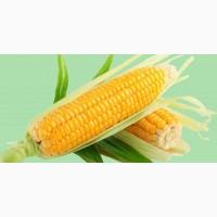 Купуємо кукурудзу у виробників з усіх регіонів