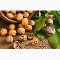 Услуги по переработке Грецкого ореха: мойка, сушка, калибровка, фасовка