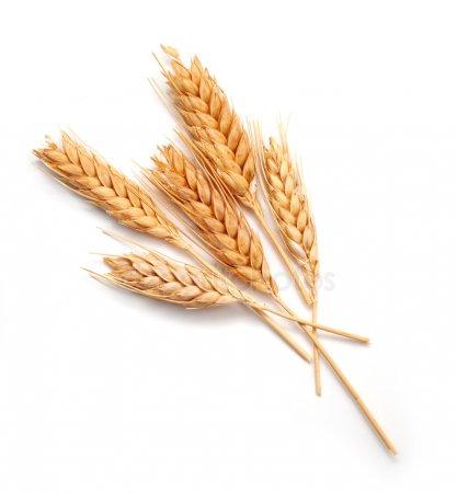 Продам с элеватора пшеницу элеватор акт зачистки