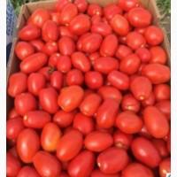 Продам товарный помидор.Сорт 3402F1