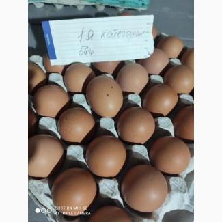 Продам яйца! 1я категория