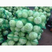 Продам капусту Золтон