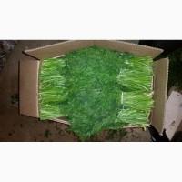 Зелень укроп, петрушка, кинза, шпинат из Узбекистана