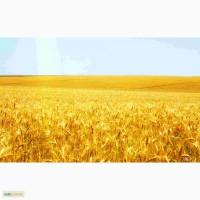 Куплю Пшеницу 2-6 класс.Цена договорная.