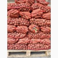 Продаём морковку, лук, капусту, свеклу, картофель с доставкой от 1 тонны