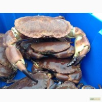 Прямые поставки молюсковые, ракообразные, рыба из Норвегии