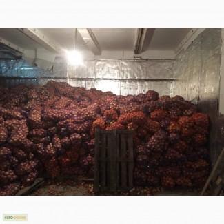 Продам лук с хранилища