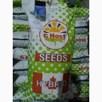 Продам гібрид кукурузи G HOST (Канада) (урож. 2017р.)