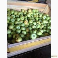Продам яблоки оптом, Херсонская обл